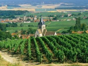 Reims champagne tour from paris